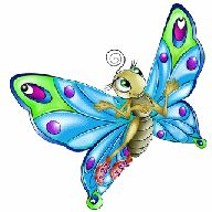 pic of butterfly